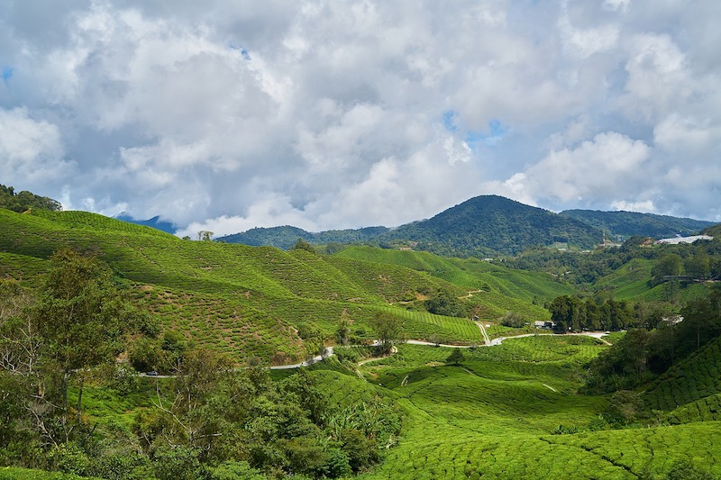 Malaysia Plantation 1
